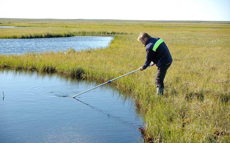 Lars-Anders Hansson samlar prover av djurplankton från en damm vid Kolyuchin Bay. Proverna kommer att analyseras för att se vad de innehåller för typer av organiska föroreningar. Foto: Henrik Kylin