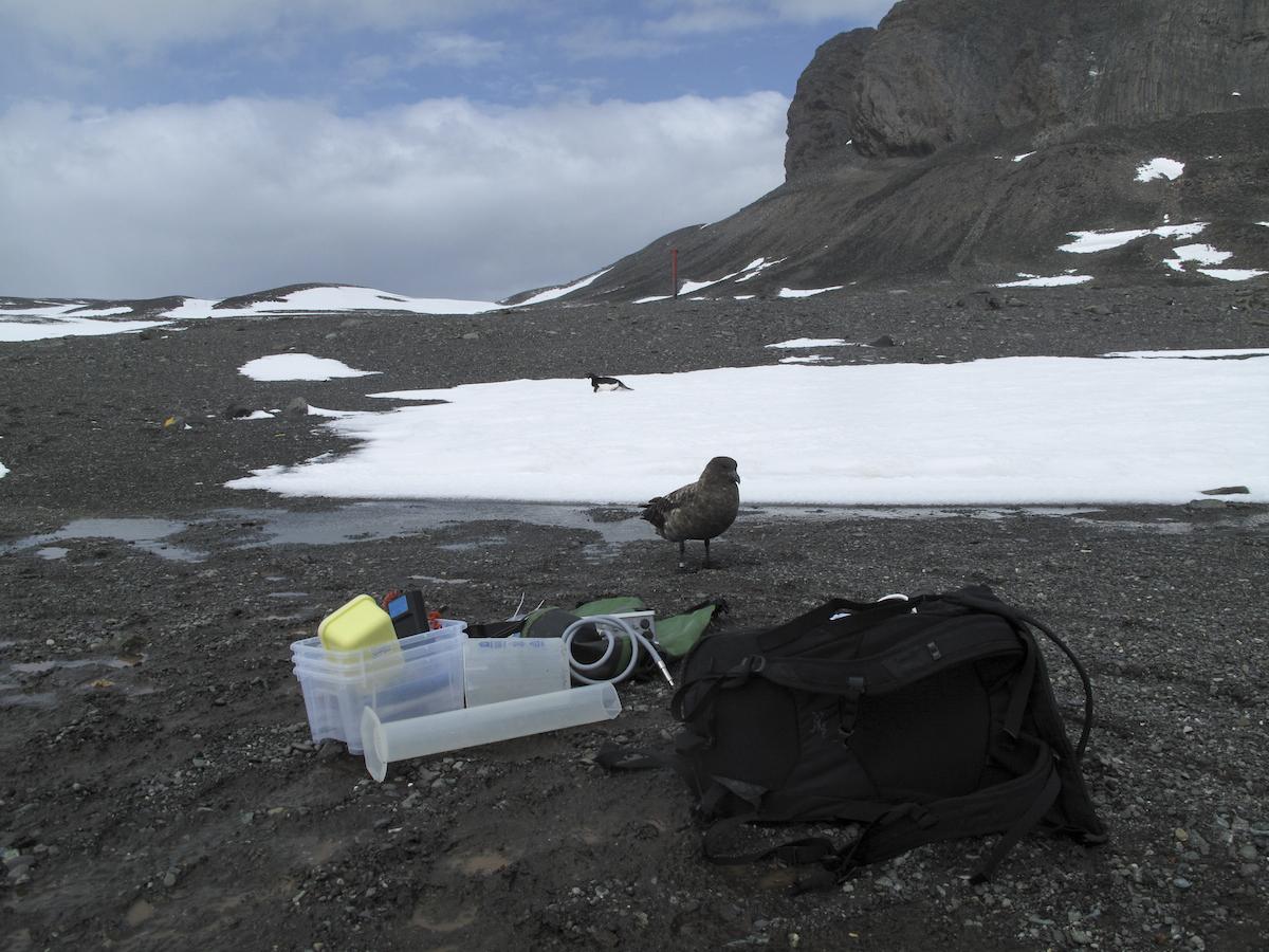 Nyfikna adeliepingviner och sydpolslabbar är ofta med oss i fältarbetet. Foto: Mikael Hedblom