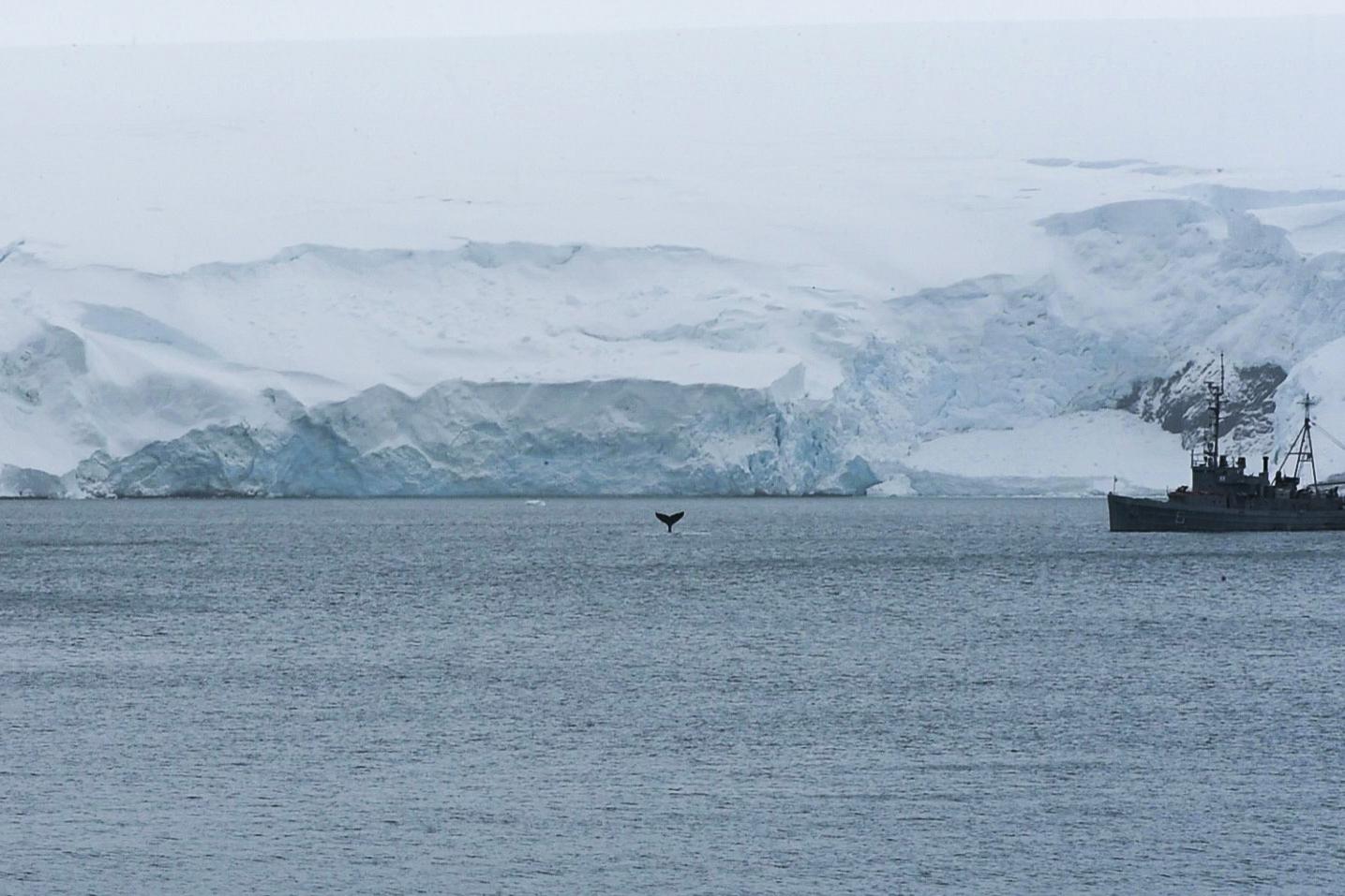 Knölvalar siktade utanför frukostfönstret. Foto: Anders Torstensson