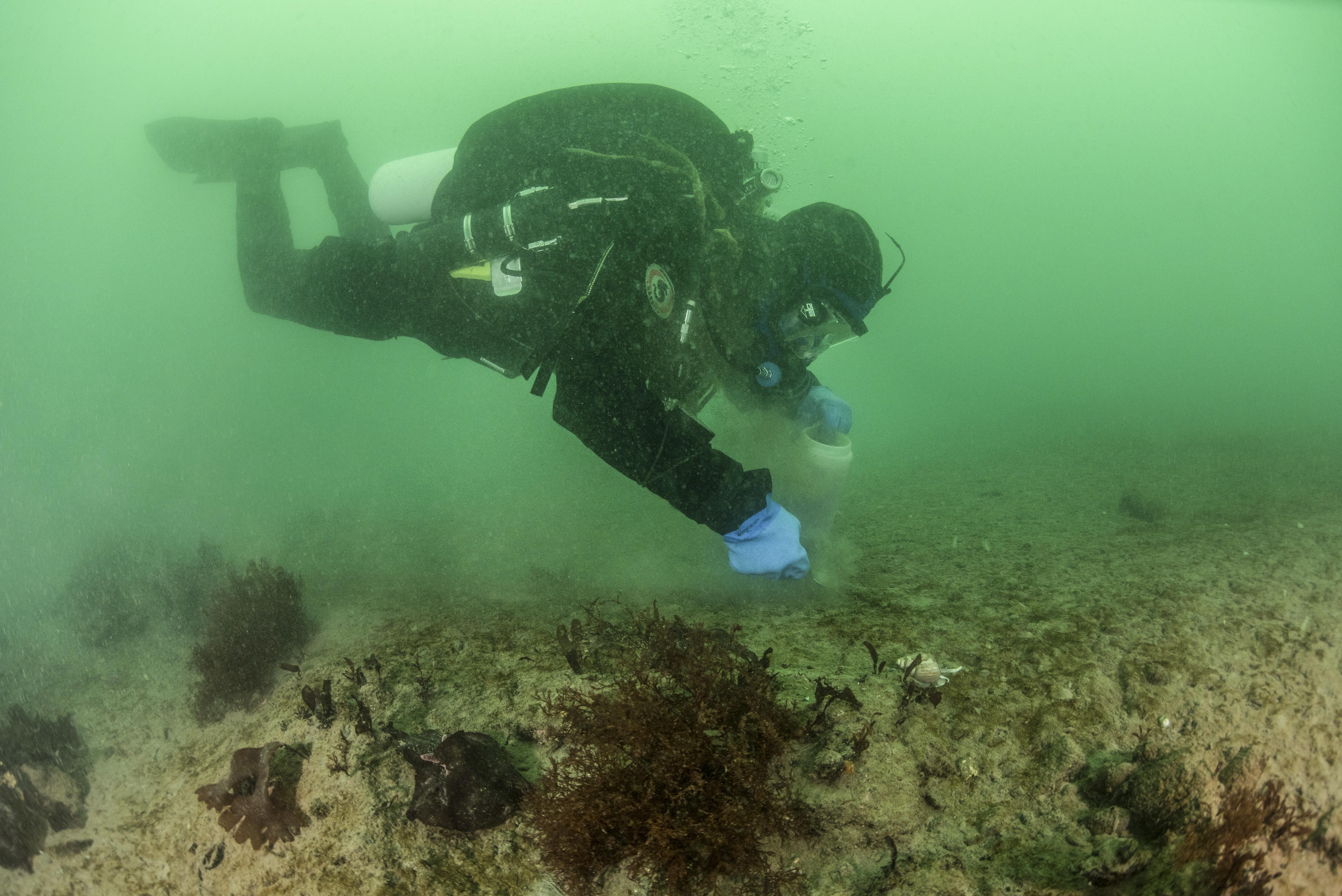 Anders Torstensson skrapar de översta millimetrarna av sedimentet för att samla bottenlevande mikroalger (de bruna fläckarna på sedimentet). Foto: Francesca Pasotti