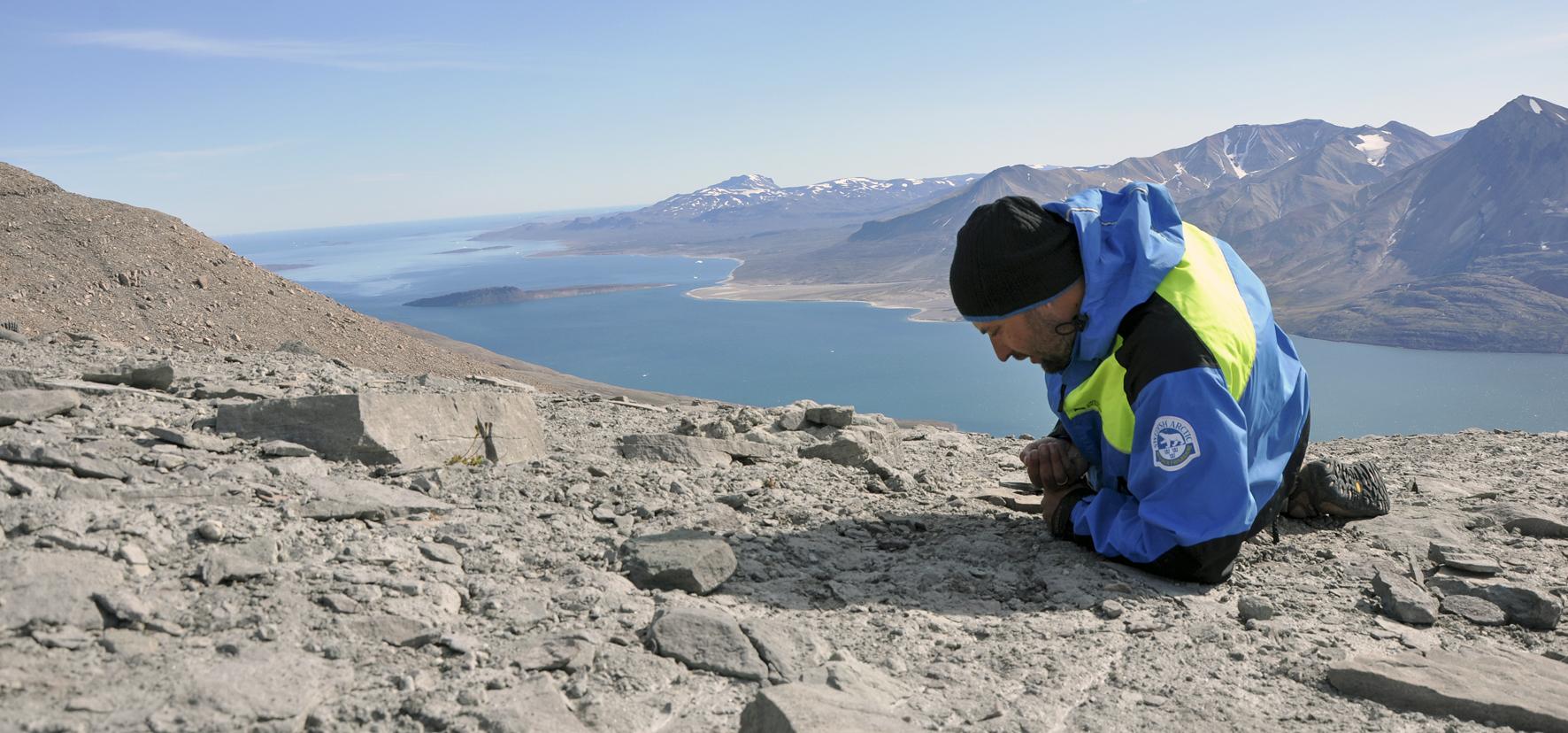 Searching for Ichthyostega bone fragments near the summit of Celsius Bjerg. Photo: Benjamin Kear