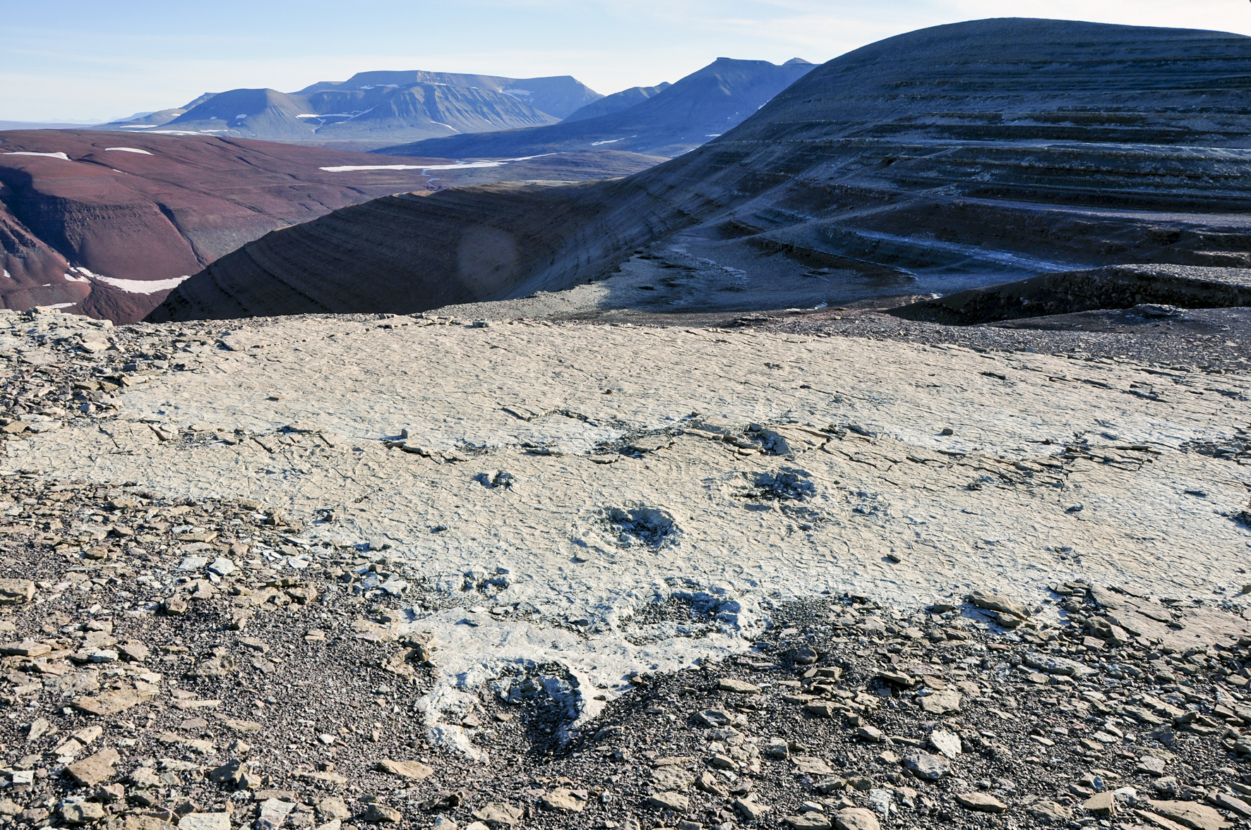 210 million year old dinosaur trackway. Photo: Benjamin Kear