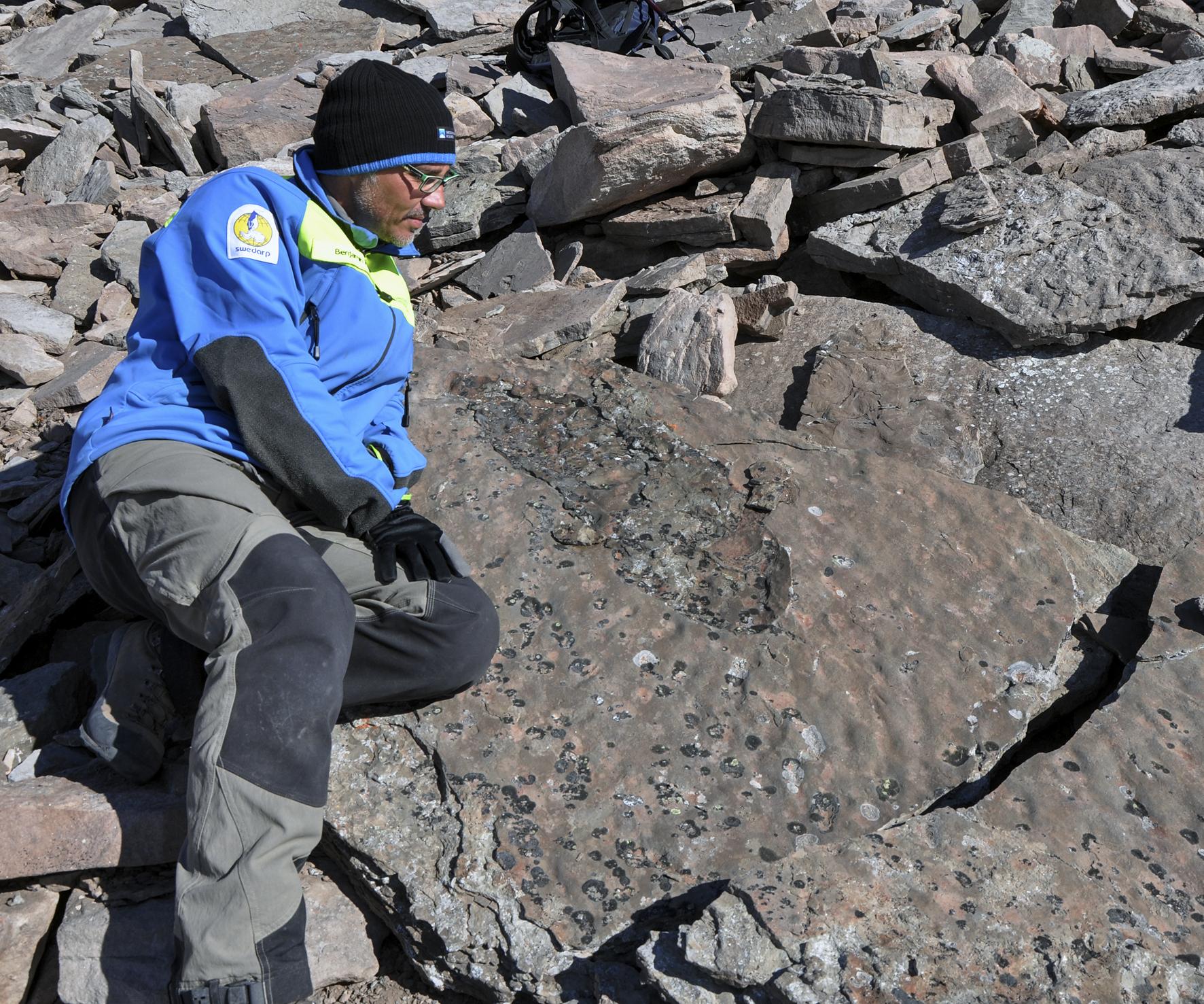 358 million year old Devonian tetrapod body trace. Photo: Grzegorz Niedzwiedzki