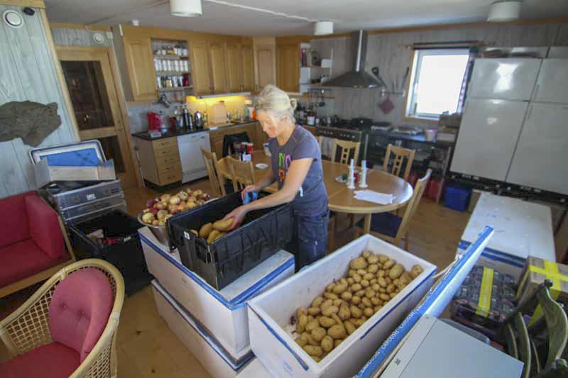 Kvinna plockar potatis ur lådor