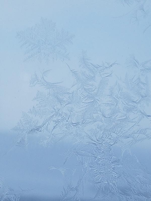 Frostrosor